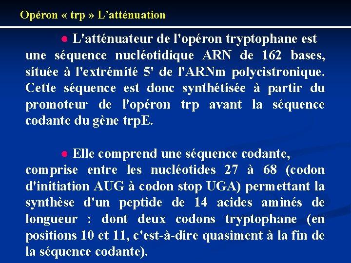 Opéron « trp » L'atténuation ● L'atténuateur de l'opéron tryptophane est une séquence nucléotidique