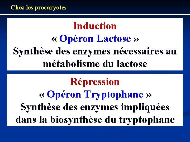 Chez les procaryotes Induction « Opéron Lactose » Synthèse des enzymes nécessaires au métabolisme