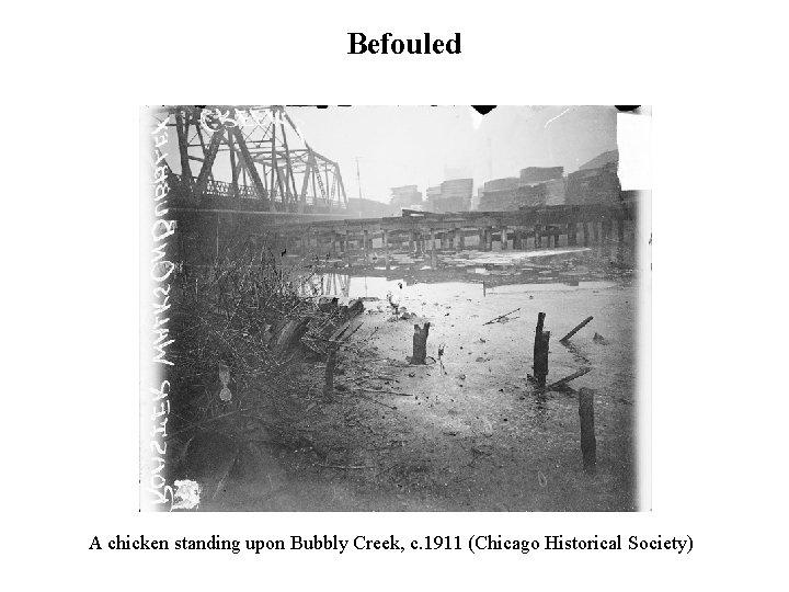 Befouled A chicken standing upon Bubbly Creek, c. 1911 (Chicago Historical Society)