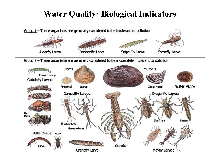 Water Quality: Biological Indicators