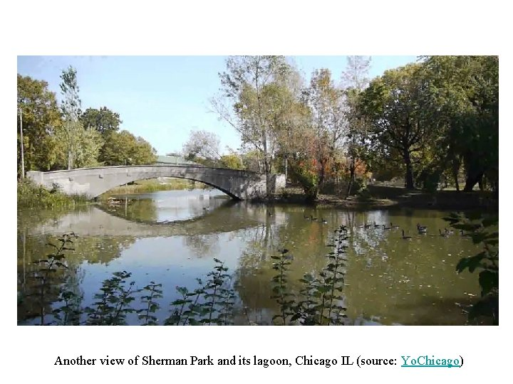 Another view of Sherman Park and its lagoon, Chicago IL (source: Yo. Chicago)