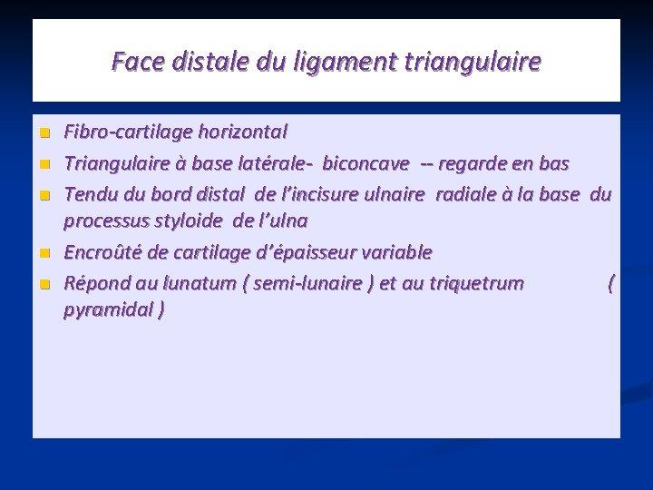 Face distale du ligament triangulaire n n n Fibro-cartilage horizontal Triangulaire à base latérale-