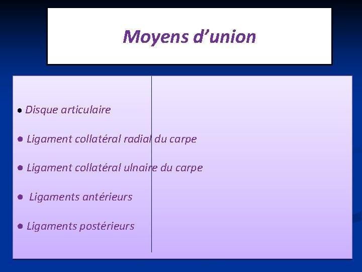 Moyens d'union ● Disque articulaire ● Ligament collatéral radial du carpe ● Ligament collatéral