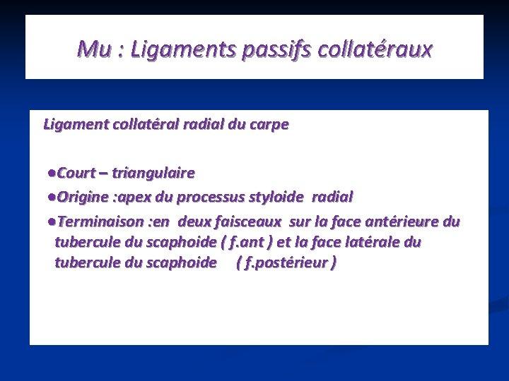 Mu : Ligaments passifs collatéraux Ligament collatéral radial du carpe ●Court – triangulaire ●Origine