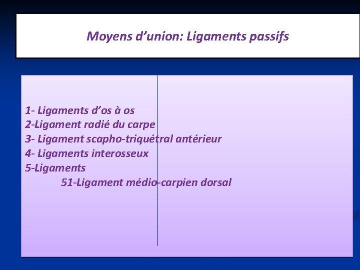 Moyens d'union: Ligaments passifs 1 - Ligaments d'os à os 2 -Ligament radié du