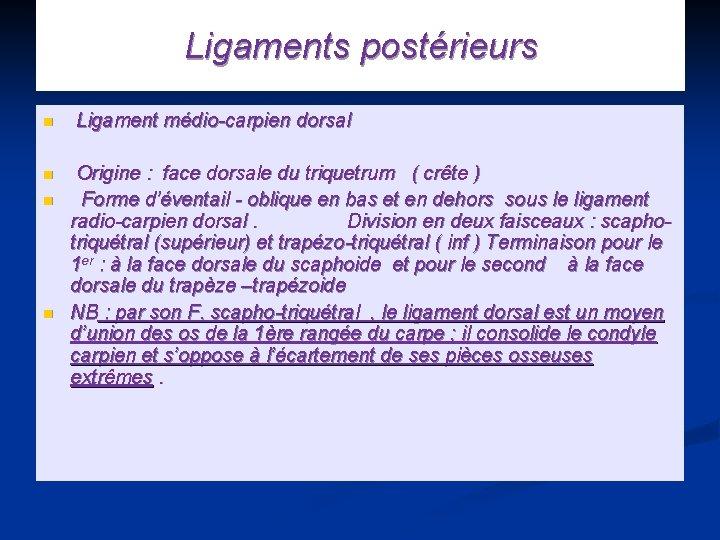 Ligaments postérieurs n Ligament médio-carpien dorsal n Origine : face dorsale du triquetrum (