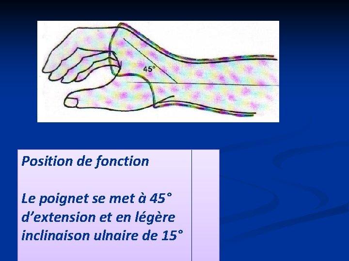 Position de fonction Le poignet se met à 45° d'extension et en légère inclinaison