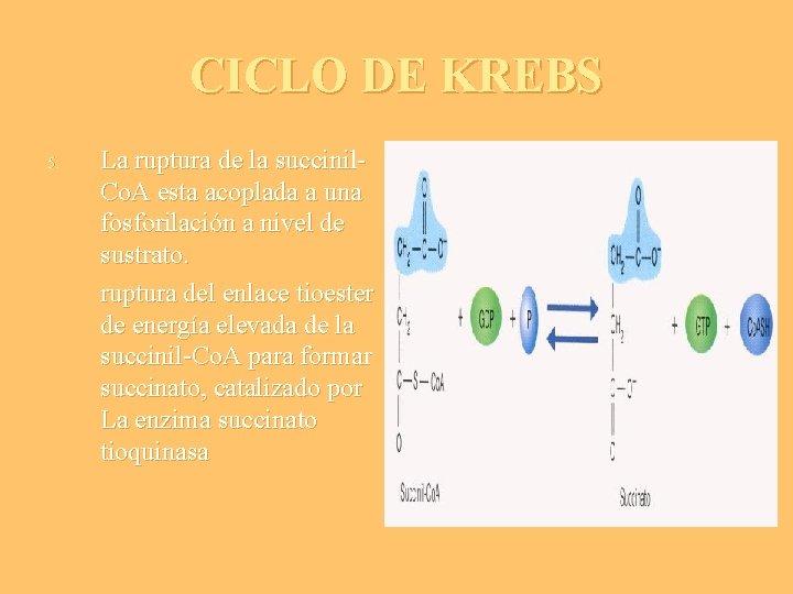 CICLO DE KREBS 5. La ruptura de la succinil. Co. A esta acoplada a