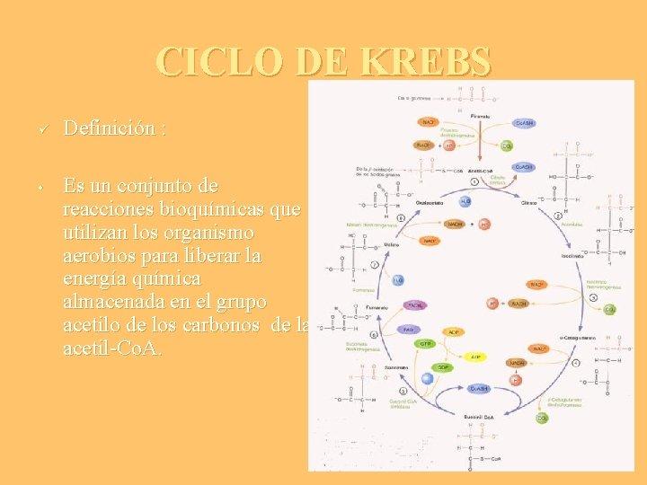 CICLO DE KREBS ü • Definición : Es un conjunto de reacciones bioquímicas que