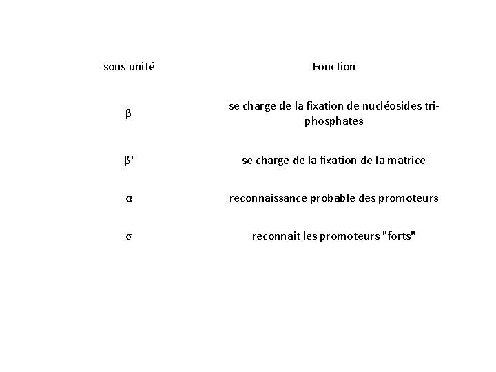 sous unité Fonction β se charge de la fixation de nucléosides triphosphates β' se