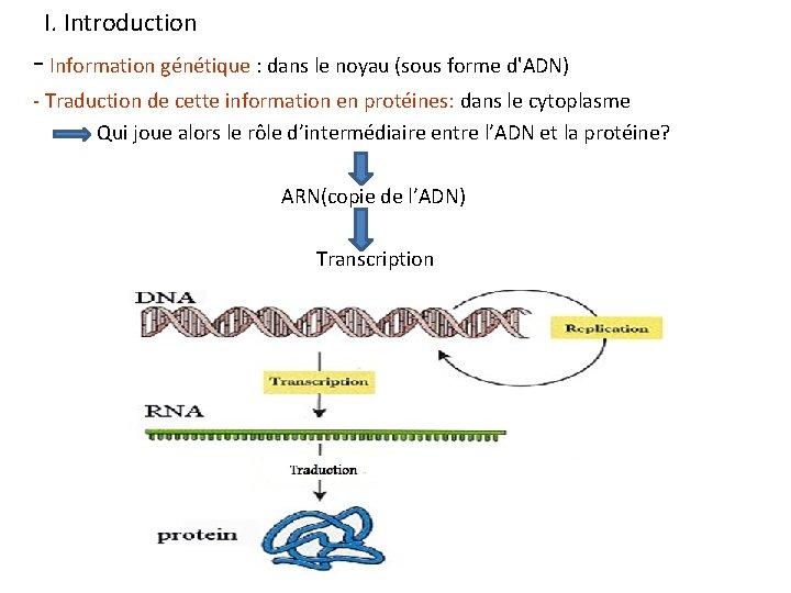 I. Introduction - Information génétique : dans le noyau (sous forme d'ADN) - Traduction