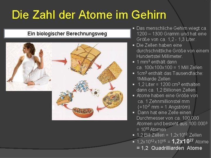 Die Zahl der Atome im Gehirn Ein biologischer Berechnungsweg § Das menschliche Gehirn wiegt
