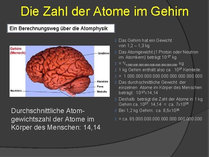 Die Zahl der Atome im Gehirn Ein Berechnungsweg über die Atomphysik ž Das Gehirn