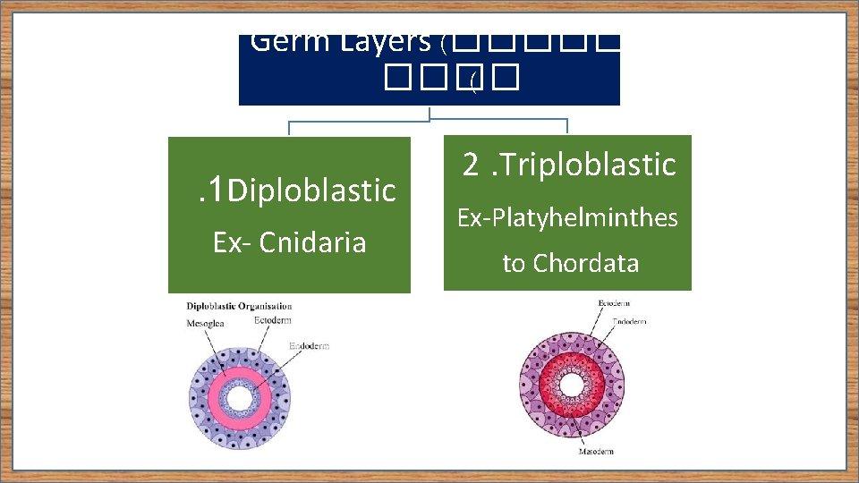 platyhelminthes diploblastic triploblast condiloame endofite plate