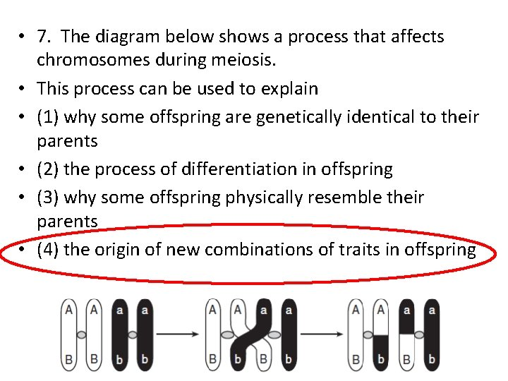 • 7. The diagram below shows a process that affects chromosomes during meiosis.