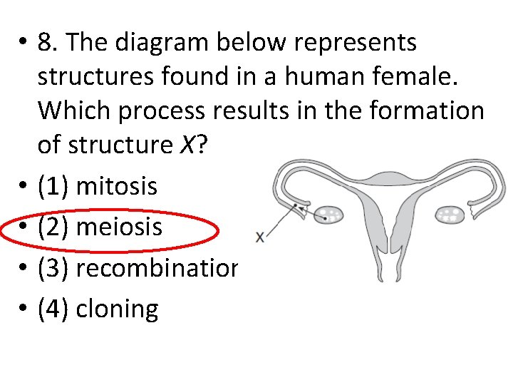 • 8. The diagram below represents structures found in a human female. Which