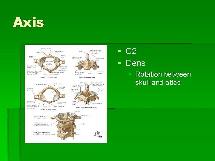 Axis § C 2 § Dens § Rotation between skull and atlas