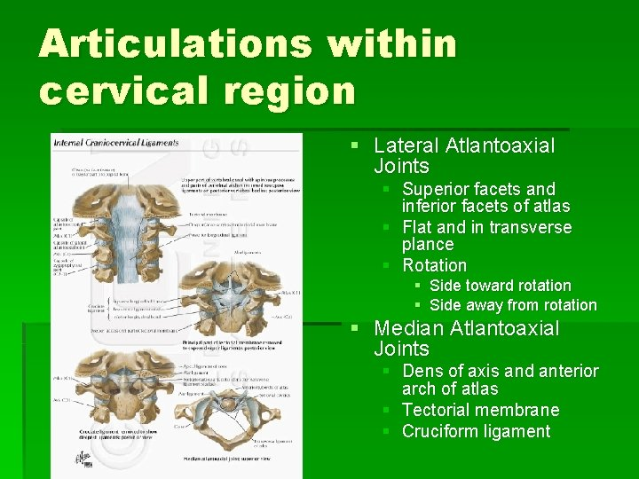 Articulations within cervical region § Lateral Atlantoaxial Joints § Superior facets and inferior facets