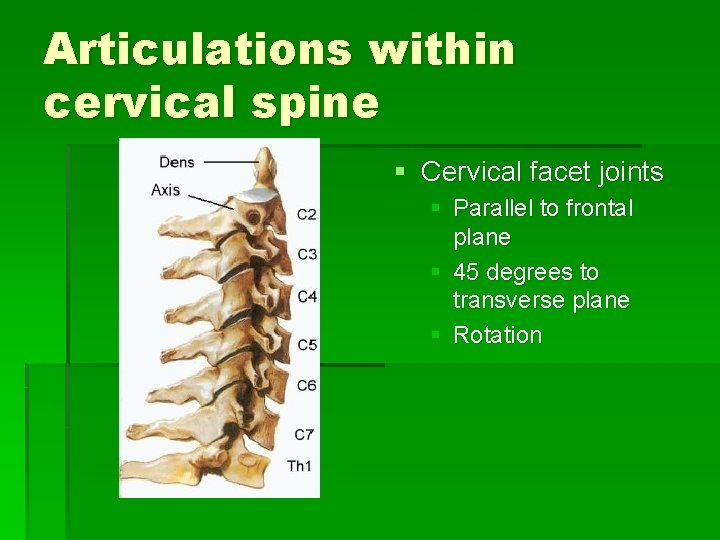 Articulations within cervical spine § Cervical facet joints § Parallel to frontal plane §