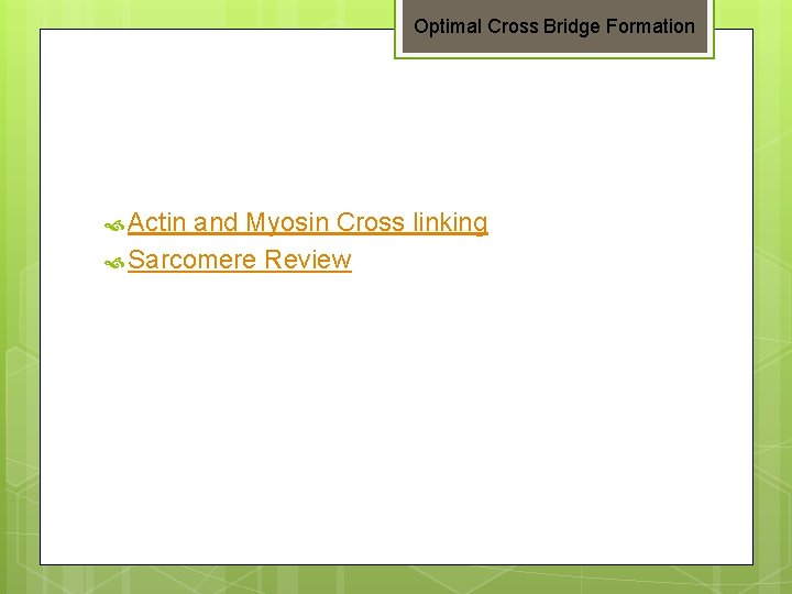 Optimal Cross Bridge Formation Actin and Myosin Cross linking Sarcomere Review