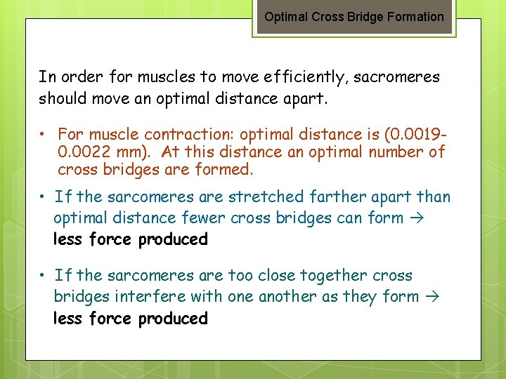 Optimal Cross Bridge Formation In order for muscles to move efficiently, sacromeres should move
