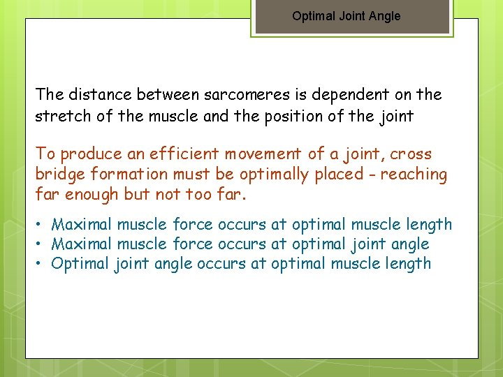 Optimal Joint Angle The distance between sarcomeres is dependent on the stretch of the