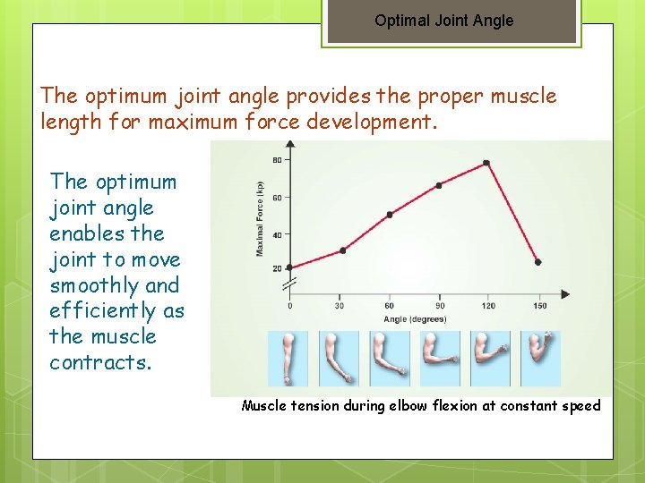 Optimal Joint Angle The optimum joint angle provides the proper muscle length for maximum