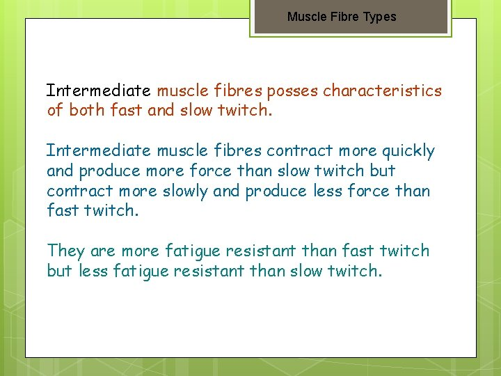 Muscle Fibre Types Intermediate muscle fibres posses characteristics of both fast and slow twitch.