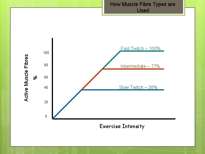 100 80 % Active Muscle Fibres How Muscle Fibre Types are Used Fast Twitch