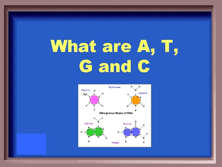 What are A, T, G and C