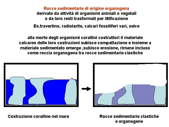 Rocce sedimentarie di origine organogena derivate da attività di organismi animali o vegetali o