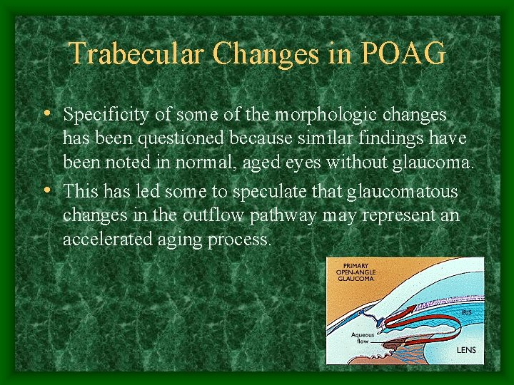 Trabecular Changes in POAG • Specificity of some of the morphologic changes has been