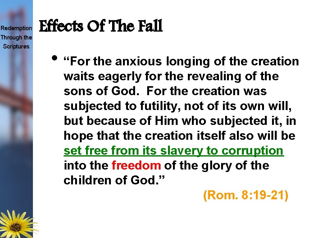 """Redemption Through the Scriptures Effects Of The Fall • """"For the anxious longing of"""