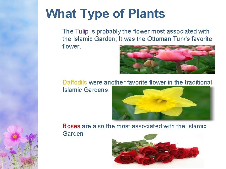 What Type of Plants The Tulip is probably the flower most associated with the