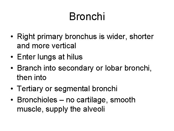 Bronchi • Right primary bronchus is wider, shorter and more vertical • Enter lungs