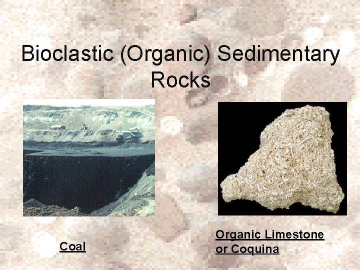 Bioclastic (Organic) Sedimentary Rocks Coal Organic Limestone or Coquina