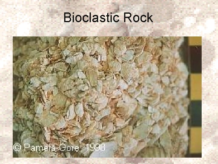 Bioclastic Rock