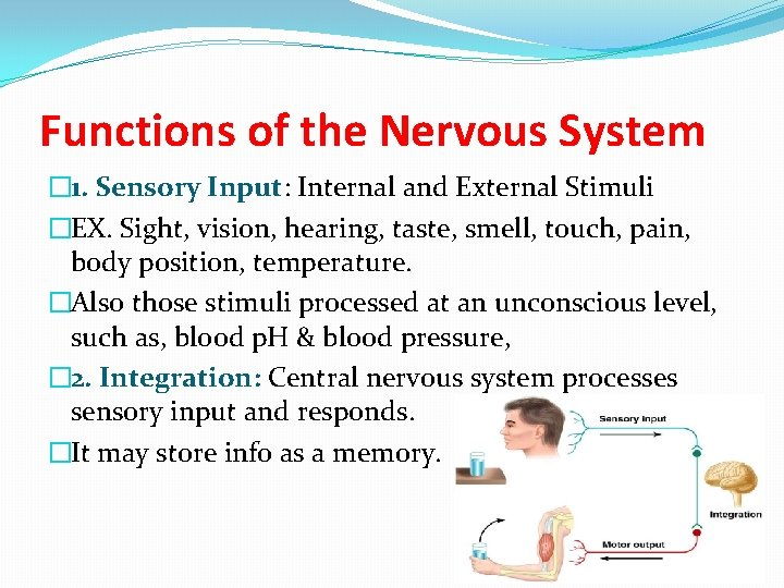 Functions of the Nervous System � 1. Sensory Input: Internal and External Stimuli �EX.
