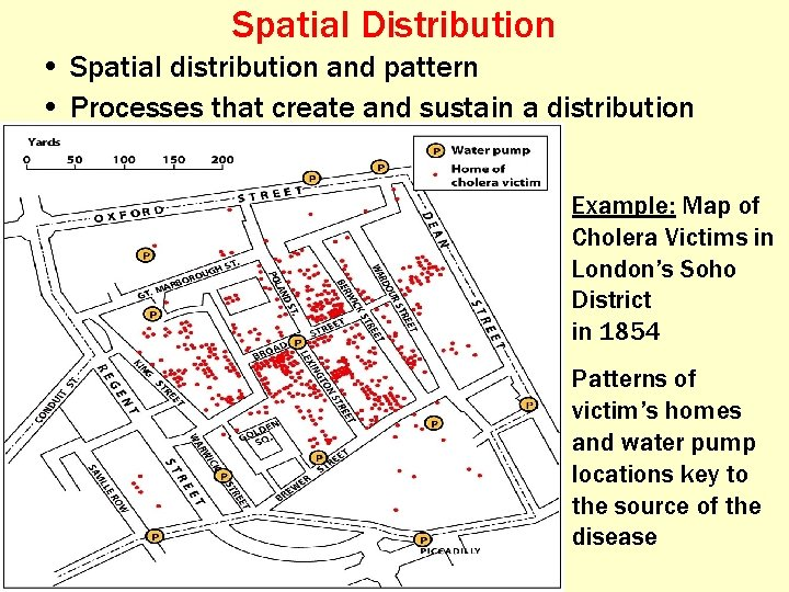 Spatial Distribution • Spatial distribution and pattern • Processes that create and sustain a