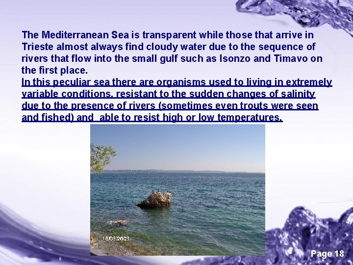 The Mediterranean Sea is transparent while those that arrive in Trieste almost always find