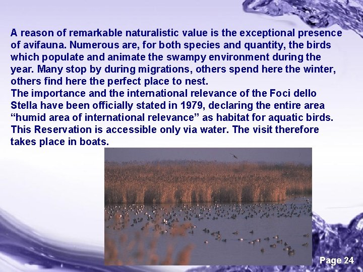 A reason of remarkable naturalistic value is the exceptional presence of avifauna. Numerous are,