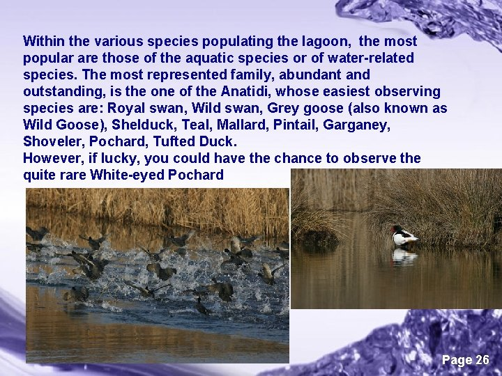 Within the various species populating the lagoon, the most popular are those of the