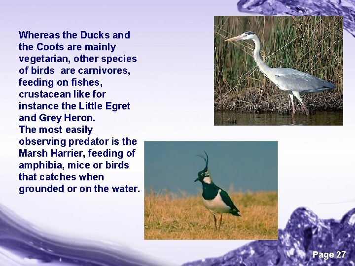 Whereas the Ducks and the Coots are mainly vegetarian, other species of birds are