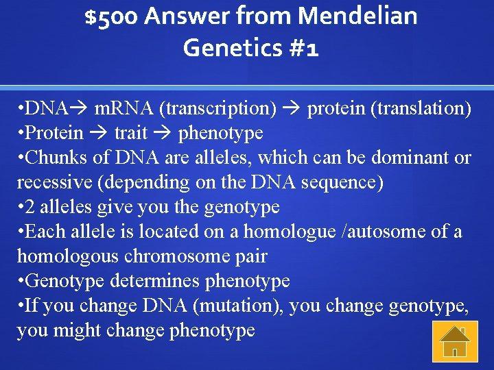 $500 Answer from Mendelian Genetics #1 • DNA m. RNA (transcription) protein (translation) •