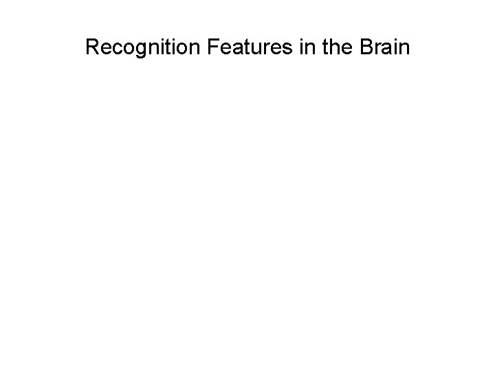Recognition Features in the Brain