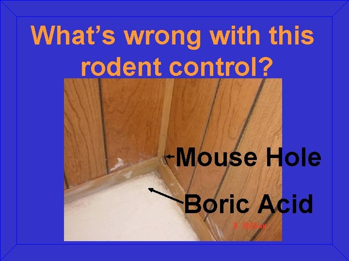 What's wrong with this rodent control? Mouse Hole Boric Acid
