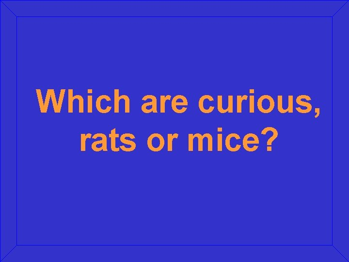 Which are curious, rats or mice?