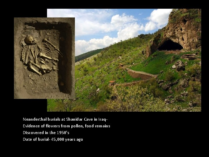 Neanderthal burials at Shanidar Cave in Iraq. Evidence of flowers from pollen, food remains