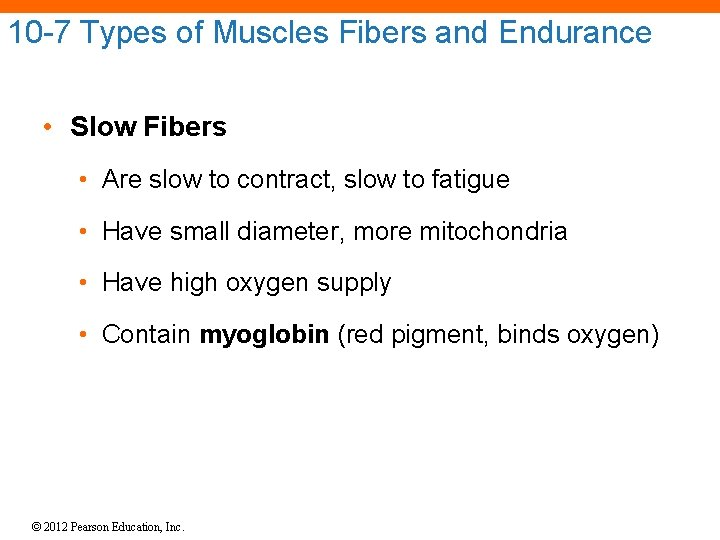 10 -7 Types of Muscles Fibers and Endurance • Slow Fibers • Are slow