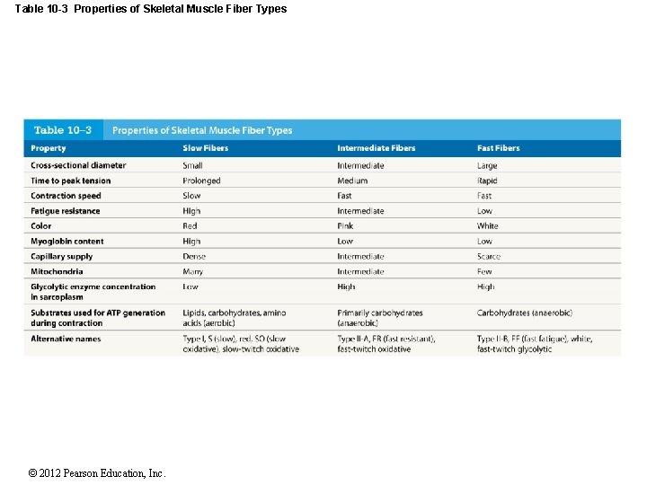 Table 10 -3 Properties of Skeletal Muscle Fiber Types © 2012 Pearson Education, Inc.
